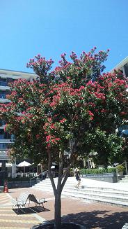20091211-nzchiristmasflower.JPG