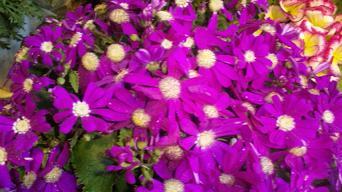 20100207-flowers3.JPG