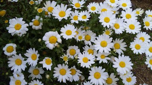 20100504-whiteflowers.JPG