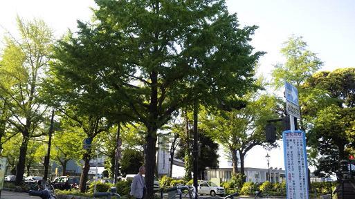 20100506-yokohamagreen.JPG